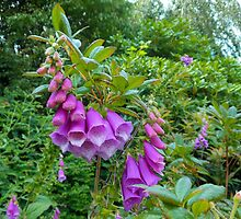Foxgloves Dreaming by kathrynsgallery