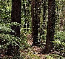 A peaceful path by Duncan Cunningham