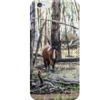 Brumby in the forest  iPhone Case/Skin