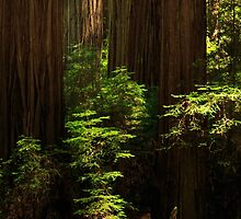 A Deer In The Redwoods by James Eddy