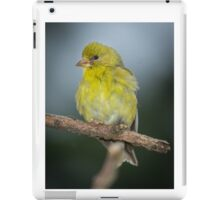 Baby Goldfinch iPad Case/Skin