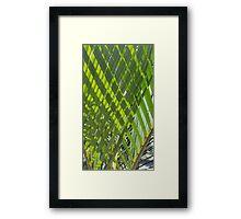 Cross Palms Framed Print