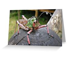 Milkweed Hopper Greeting Card