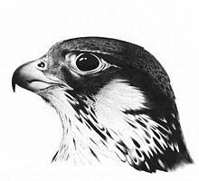 Fantasy Falcon - Bic Biro Pen Ink Drawing by Dan Forder