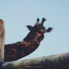Giraffe  by Santamariaa