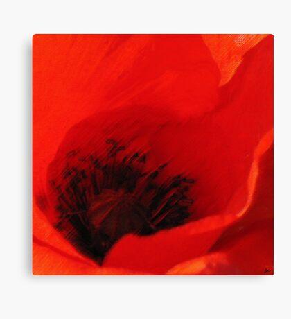 Breeze - Dan ART Red Poppy Flower Pastel Sketch Canvas Print