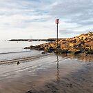 Lyme Regis Seascape - July by Susie Peek