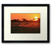 Springbok - African Wildlife Background - Magnificent Sun Framed Print