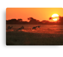 Springbok - African Wildlife Background - Magnificent Sun Canvas Print