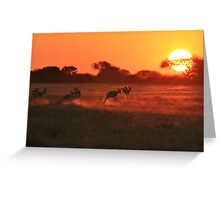 Springbok - African Wildlife Background - Magnificent Sun Greeting Card
