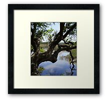 Old Tree Reaching Over To Taste The Water Framed Print