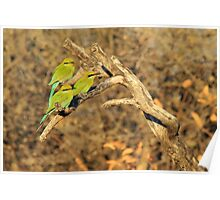 Bee-eater - African Wild Birds - Colorful Friends Poster