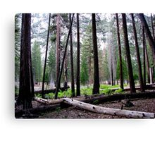Woodland Vista--Kings Canyon Canvas Print