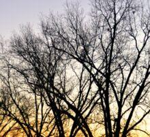 Sunset behind Trees Sticker