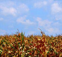 Corn Field with Clouds Sticker