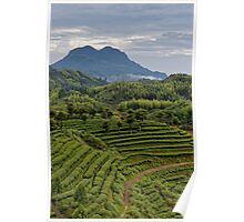 The Tea Farm and the Mountain Poster