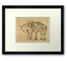 Vintage Elephant and Human Skeleton Illustration Framed Print