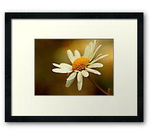 Flora - Hazy Daisy Framed Print
