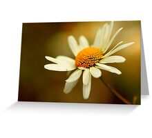 Flora - Hazy Daisy Greeting Card