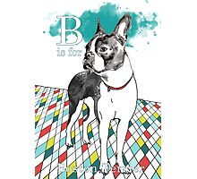 B is for Boston Terrier I Photographic Print