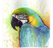 Macaw Colorful Bird Portrait Watercolor Painting Poster