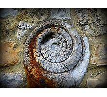 Jurassic Fossil in Lyme Regis Photographic Print