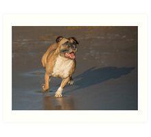 Staffordshire bull terrier running Art Print