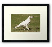 """""""Dare To Be Different"""" (Rare White Raven) Framed Print"""