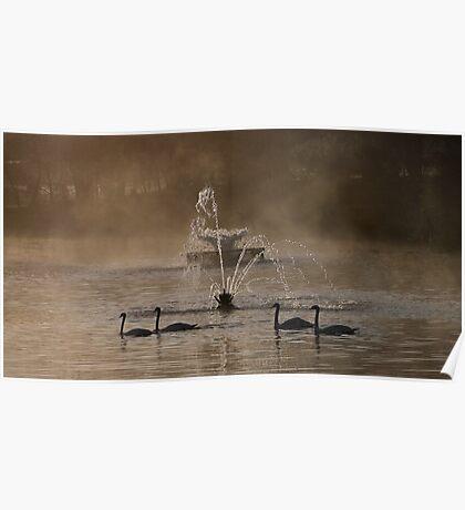 Symmetrical Swans Poster