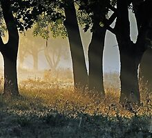 The Trees Beyond the Trees by kelvinLemur