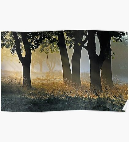 The Trees Beyond the Trees Poster
