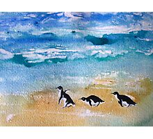 Three Little Penguins Out for a Stroll by Heather Holland Photographic Print