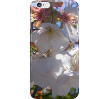 Sakura, Cherry Blossom iPhone Case/Skin