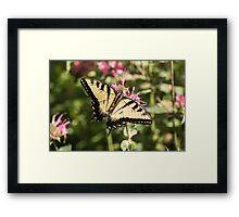Swallowtail Butterfly 2016-1 Framed Print