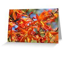 Orange Yellow Flowers Greeting Card