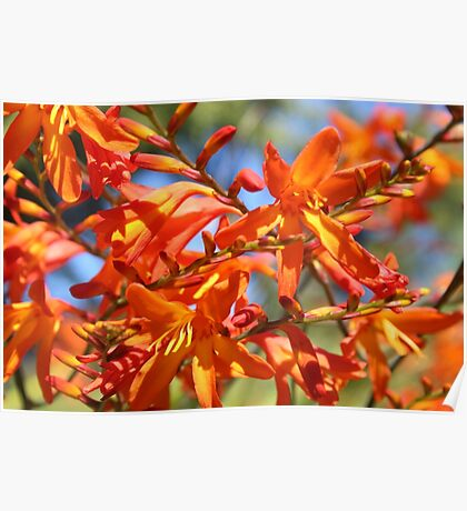 Orange Yellow Flowers Poster