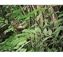 squirrel Photographic Print