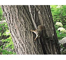 squirrel 2 Photographic Print