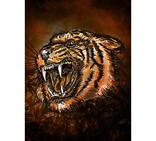 Tiger head. Photographic Print