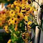 Flowers through the Bench by britrosephotos