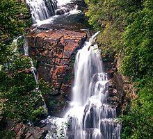 D'Alton Falls - Overland Track Tasmania Australia by Ron Finkel