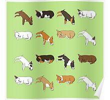 Lazy Bull Terrier - Green Poster
