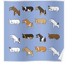 Lazy Bull Terrier - Blue Poster