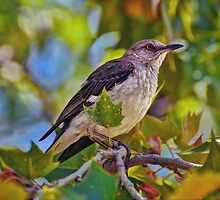 Mockingbird by Savannah Gibbs
