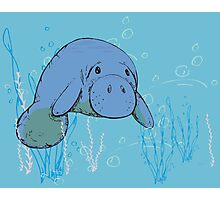 Blue Manatee Photographic Print