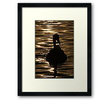 Swan Sunset Framed Print