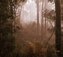 Bushwalking in the Fog by Lozzar Landscape