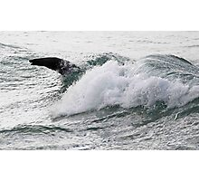 Surfing Seal Photographic Print