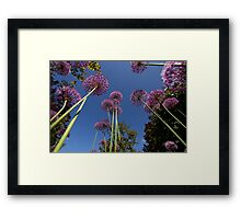 Flowers at Hodsock Priory Framed Print