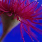 Terrestrial Flower  by Liz Worth